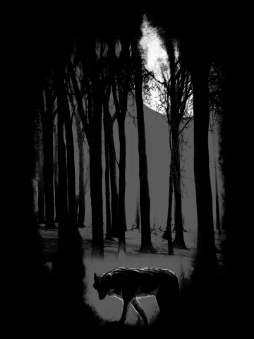 Midnight Territory