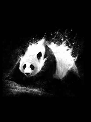 Milky Panda