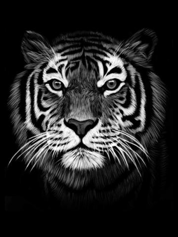 Natural beauty tiger