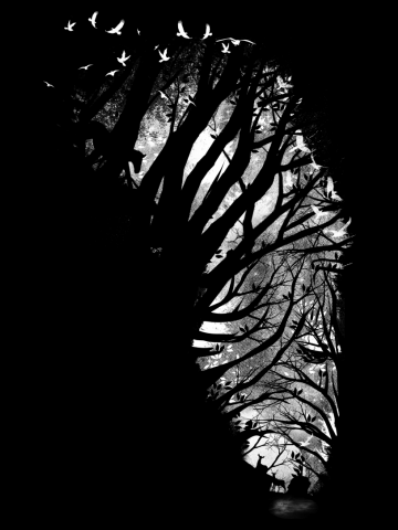 Nature Stripes