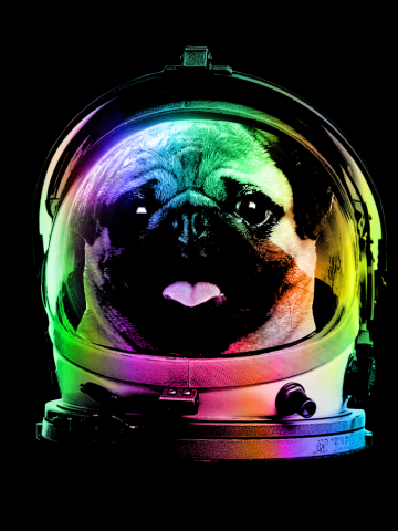 Pug in Space