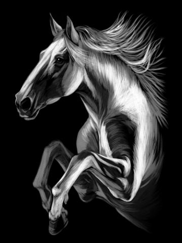 The horse jump