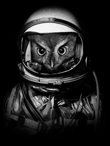 Astronaut owl