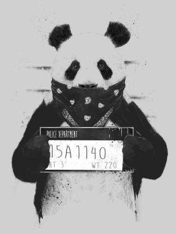 Panda Fellon