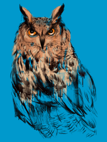 The Grand Duke of Owls