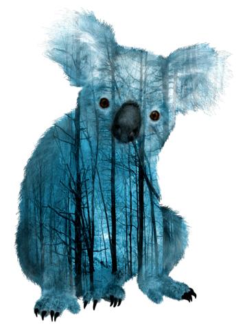 Australian Misty Foret Koala Bear