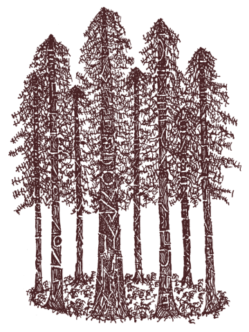 Cathedral Ring Sketch (Coastal Redwoods)