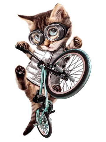 Cool biker cat