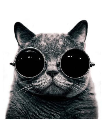 Swag Cat - Pisica cu ochelari